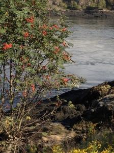 Reversing Falls~Saint John, New Brunswick, Canada