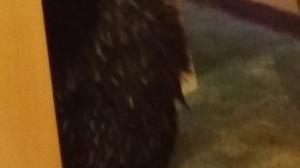 Wet Fur
